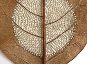 Leaf embroidry