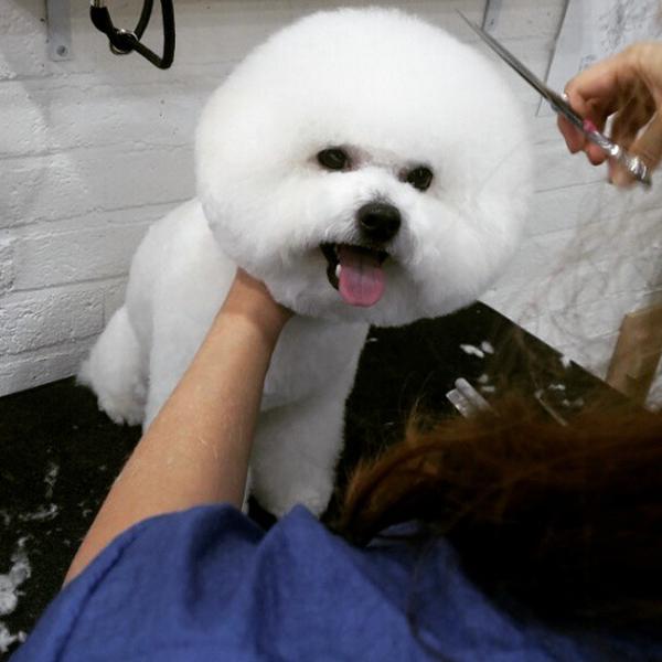 Circular Dog Hairstyle