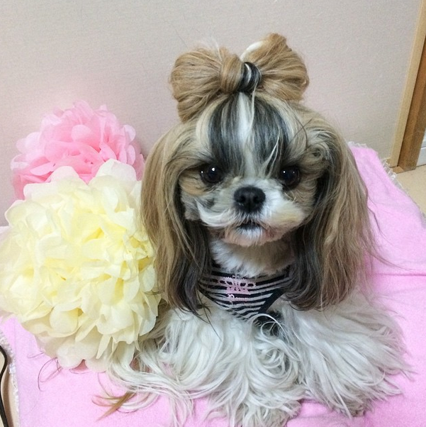 Dog Hairstyle- Bangs