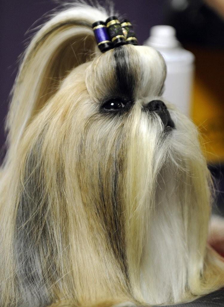 Dog Hairstyle