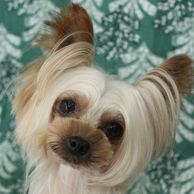 Dressed To The Ca Nines 9 Dog Hairstyles For The Stylish