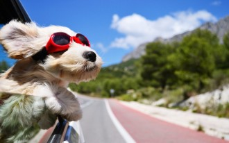 dog-in-car-wearing-cool-sunglasses-images