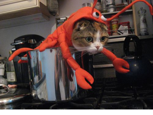 lobster-cat-halloween-costume-png