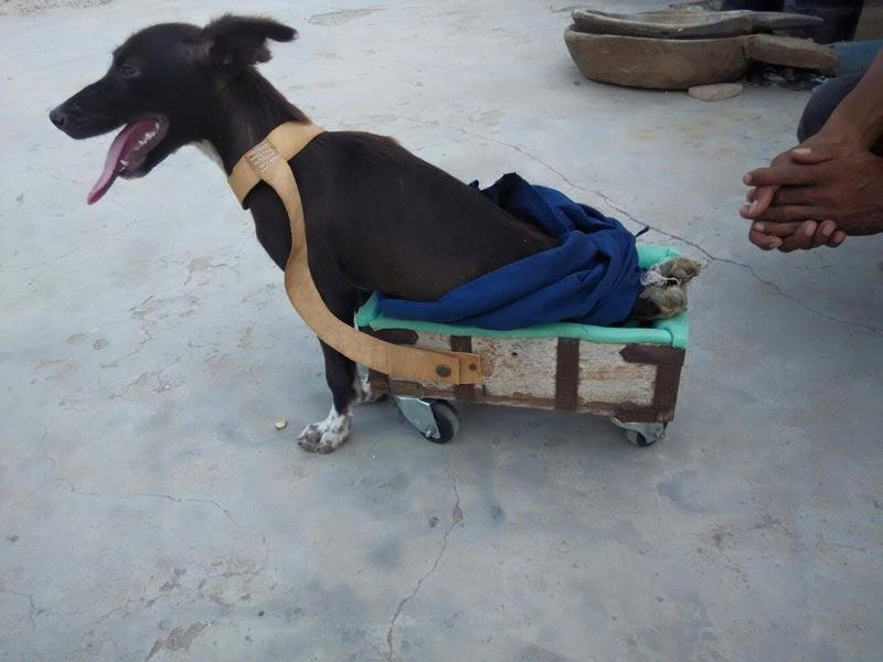 paralysed dog trolley Hritesh Lohiya